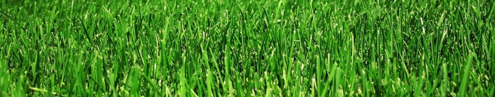 Lawn Care Services - South Ogden Utah | Wilkins Landscaping